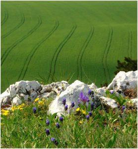 Tavaszi mező és mészkő sziklák a tokodi Hegyestető oldalában